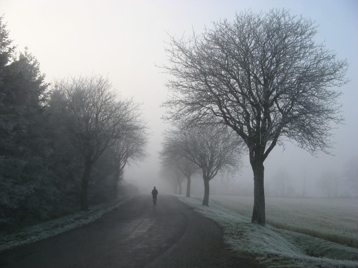 Free Images Tree Snow Girl Fog Road Mist Sunlight