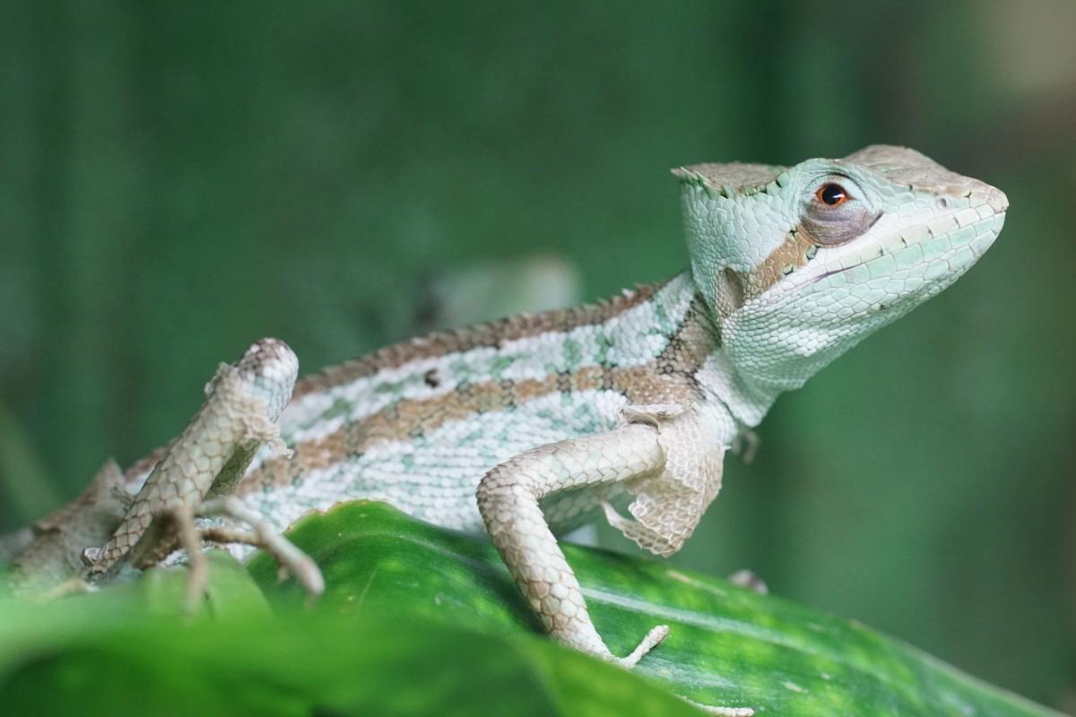Pocas-especies-reptiles-son-vivíparas