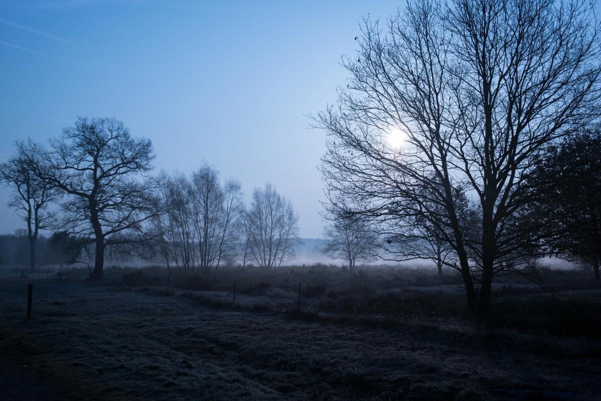 sun fog sunrise trees - photo #31