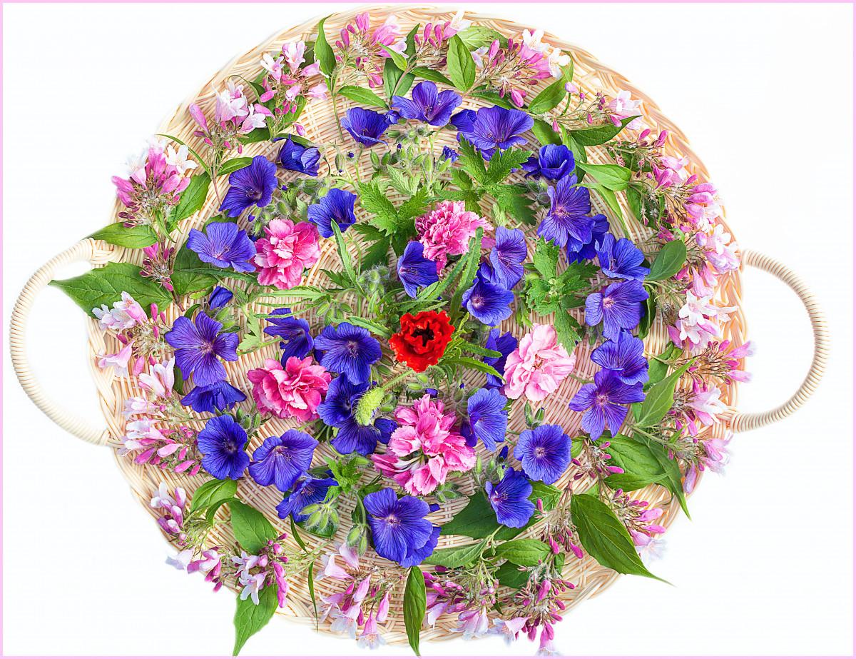 Images Gratuites La Nature Fleur Blanc Violet P Tale Floraison T Printemps Vert