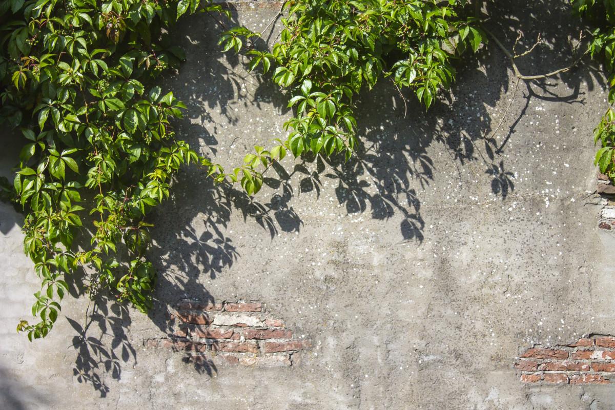 Tree Design On Wall