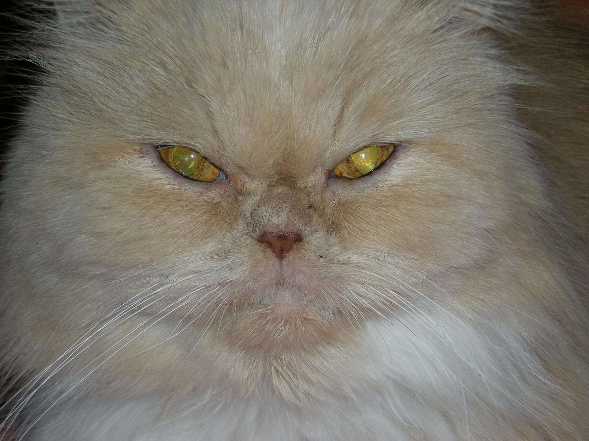 cat toys petsmart