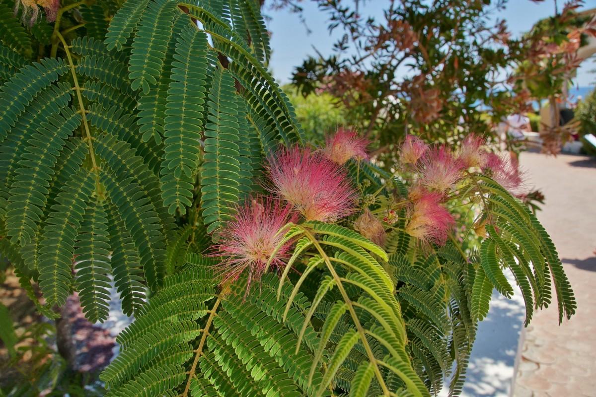 Images gratuites arbre feuille produire botanique for Plante ligneuse