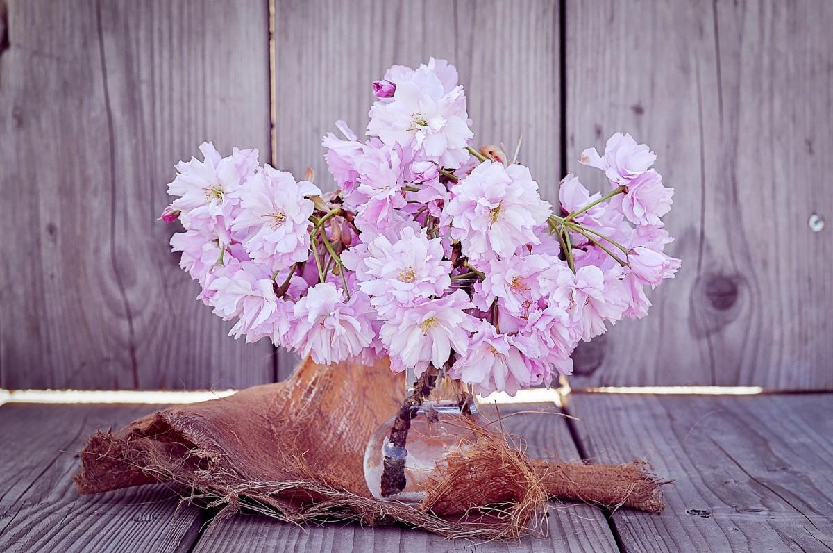 images gratuites branche p tale verre vase d coration printemps produire rose fermer. Black Bedroom Furniture Sets. Home Design Ideas