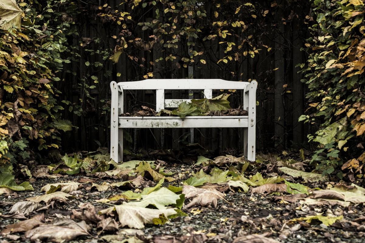 무료 이미지 : 나무, 자연, 잔디, 목재, 벤치, 농장, 잎, 보도, 꽃 ...