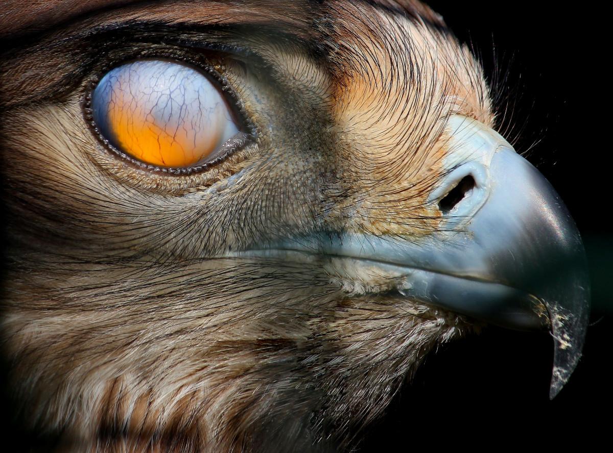 Gambar Alam Margasatwa Sapi Binatang Menyusui Fauna