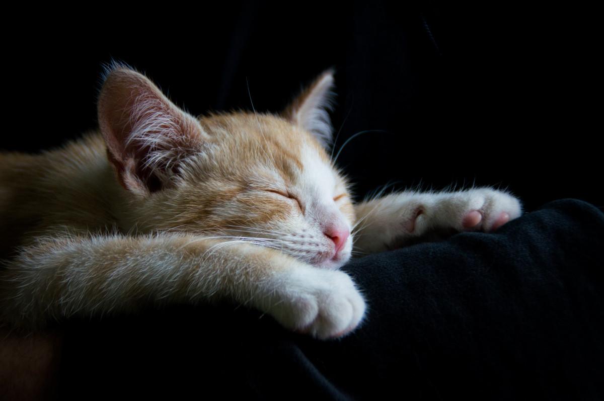 первое открытка как спалось милый ярким