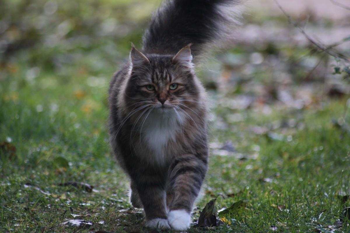 mačička nohy pic veľké prsia s peknou mačička