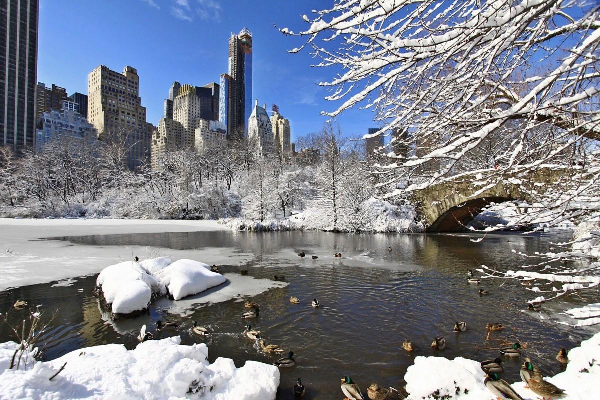 Картинки зима центральный парк