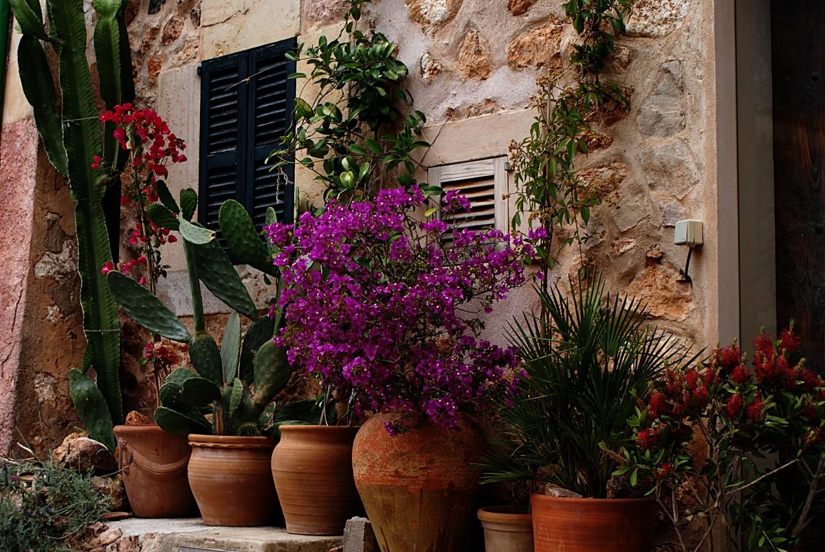 Fotos gratis planta casa flor ventana pared verano for Diseno jardin mediterraneo