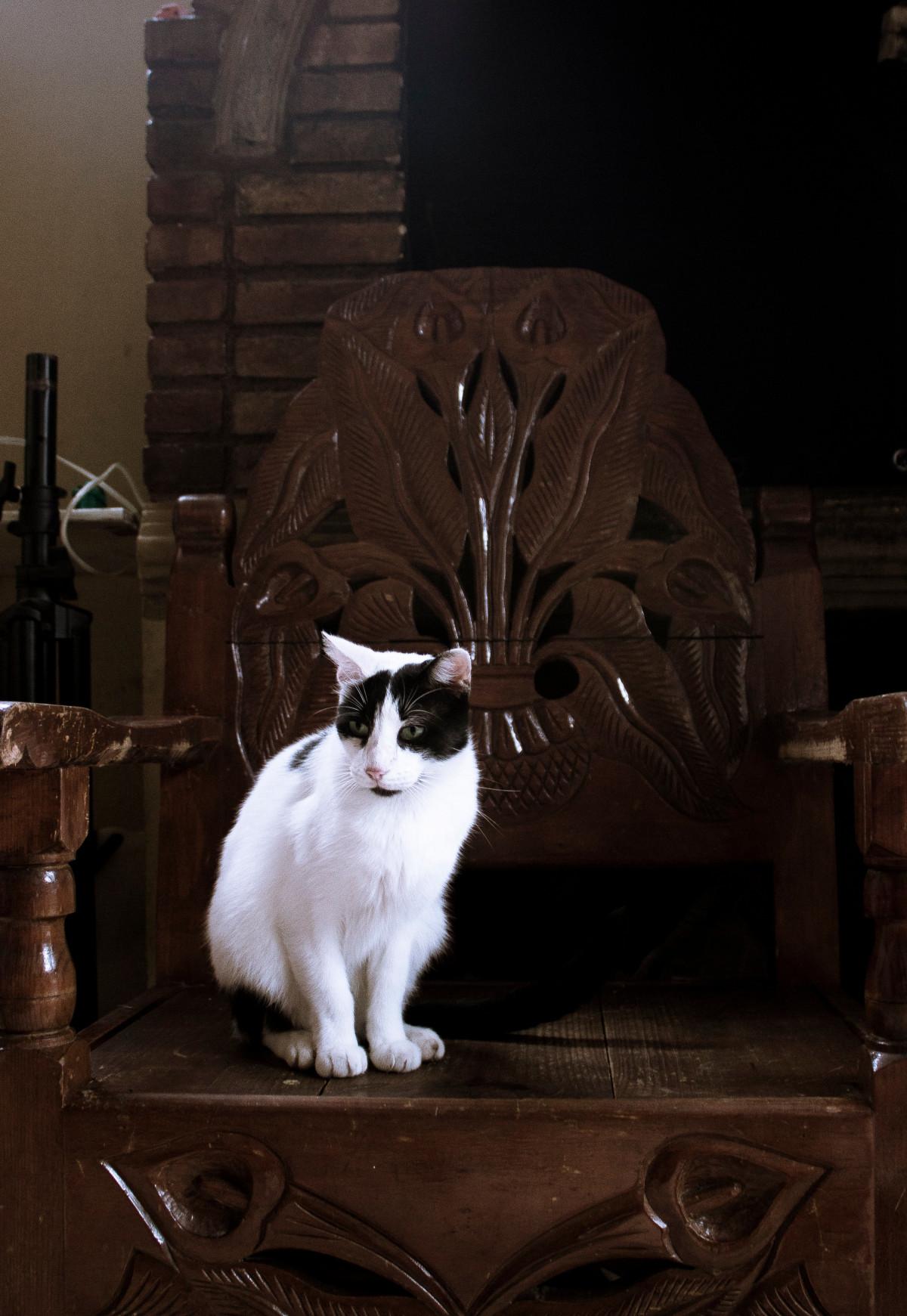 Gambar Kucing Oranye Putih godean.web.id