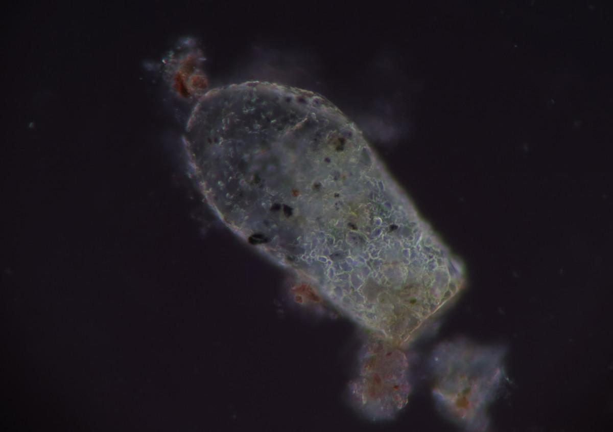 Gambar biologi mikroskop mikrofotografie mikrofoto
