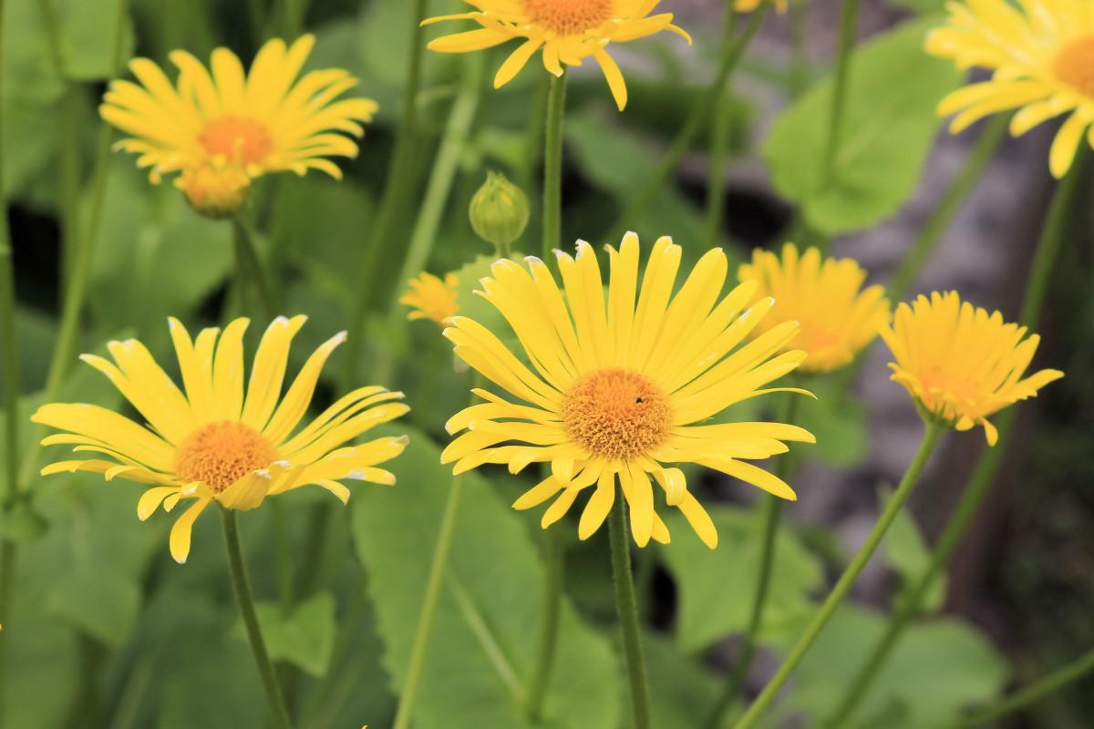 Images gratuites plante prairie fleur p tale for Plante annuelle