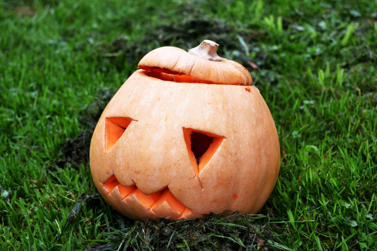 free images produce pumpkin halloween squash gourd jack o
