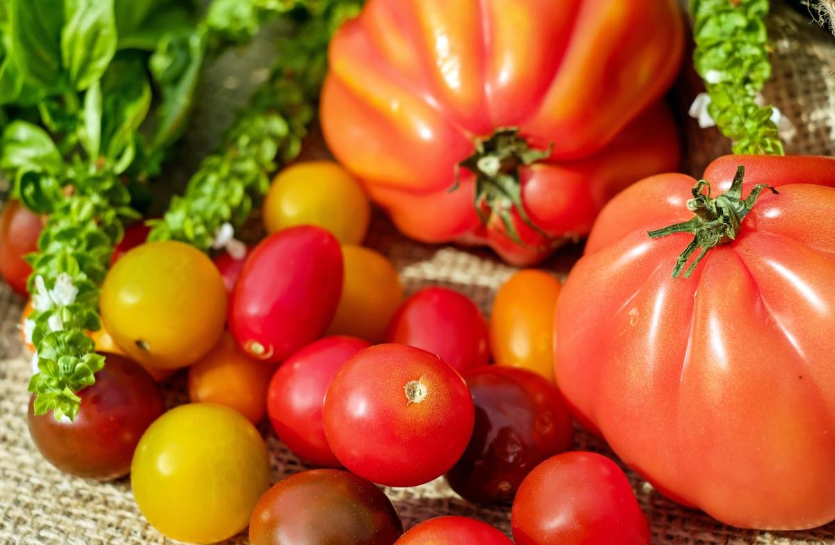 растение, фрукты, лето, Пища, уборка урожая, производить, Овощной, Красочный, помидор, Помидоры, Витамины, Фришь, цветущее растение, Наземный завод, Картофель и томатный сорт