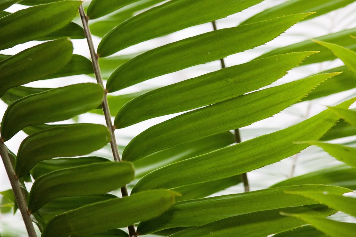 Images gratuites feuille deux flore mexique cycade for Plante jungle