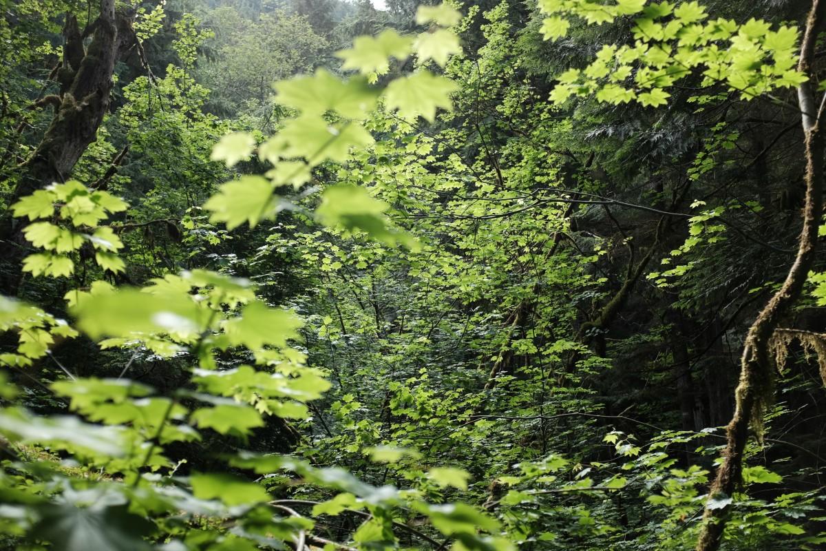 Images gratuites arbre la nature for t la personne for Plante ligneuse