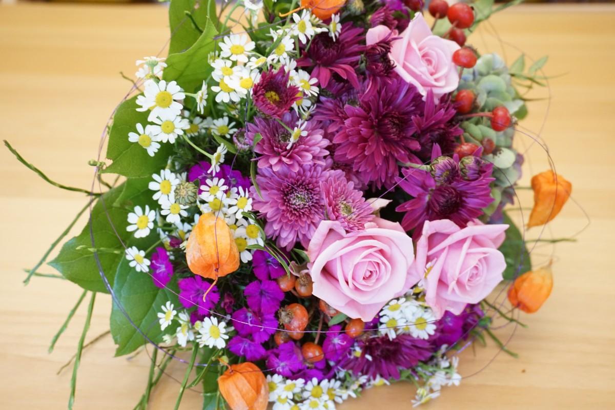 садовые цветы фото крокуса