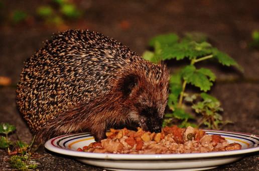 kostenlose foto  natur blatt tier niedlich tierwelt