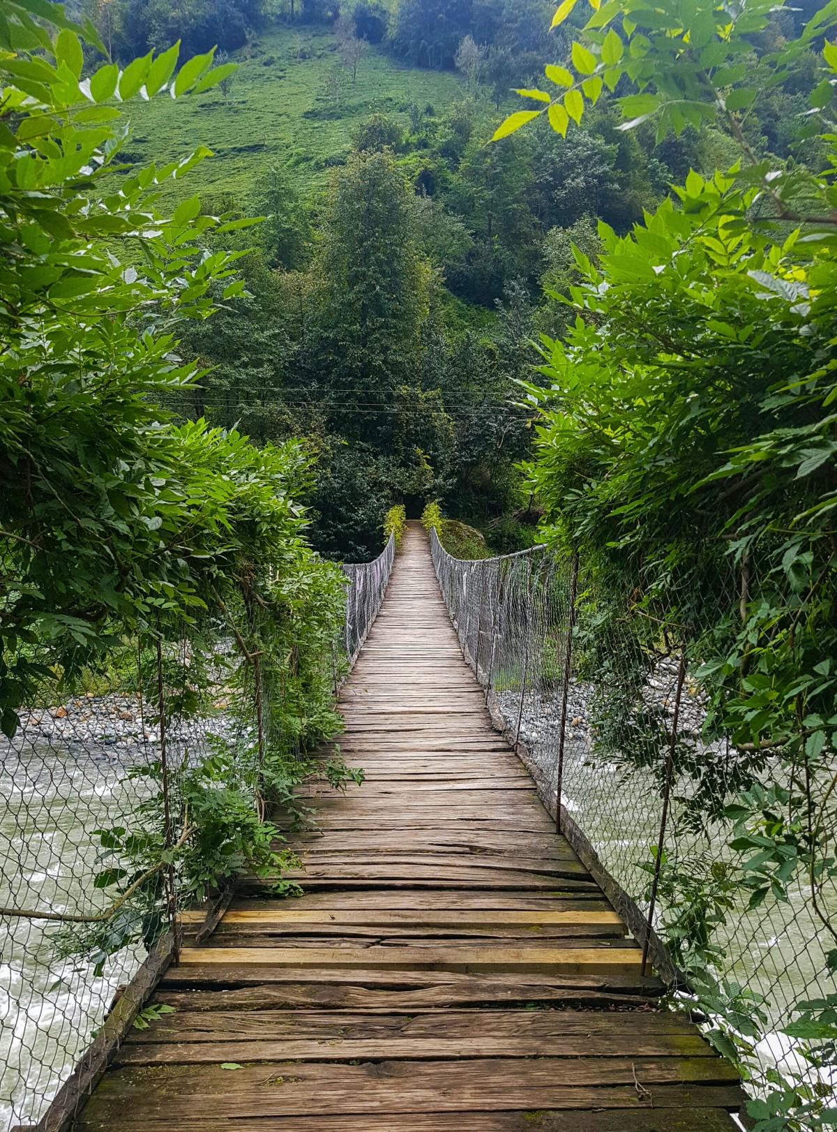 Free Images Forest Bridge River Stream Jungle Dam