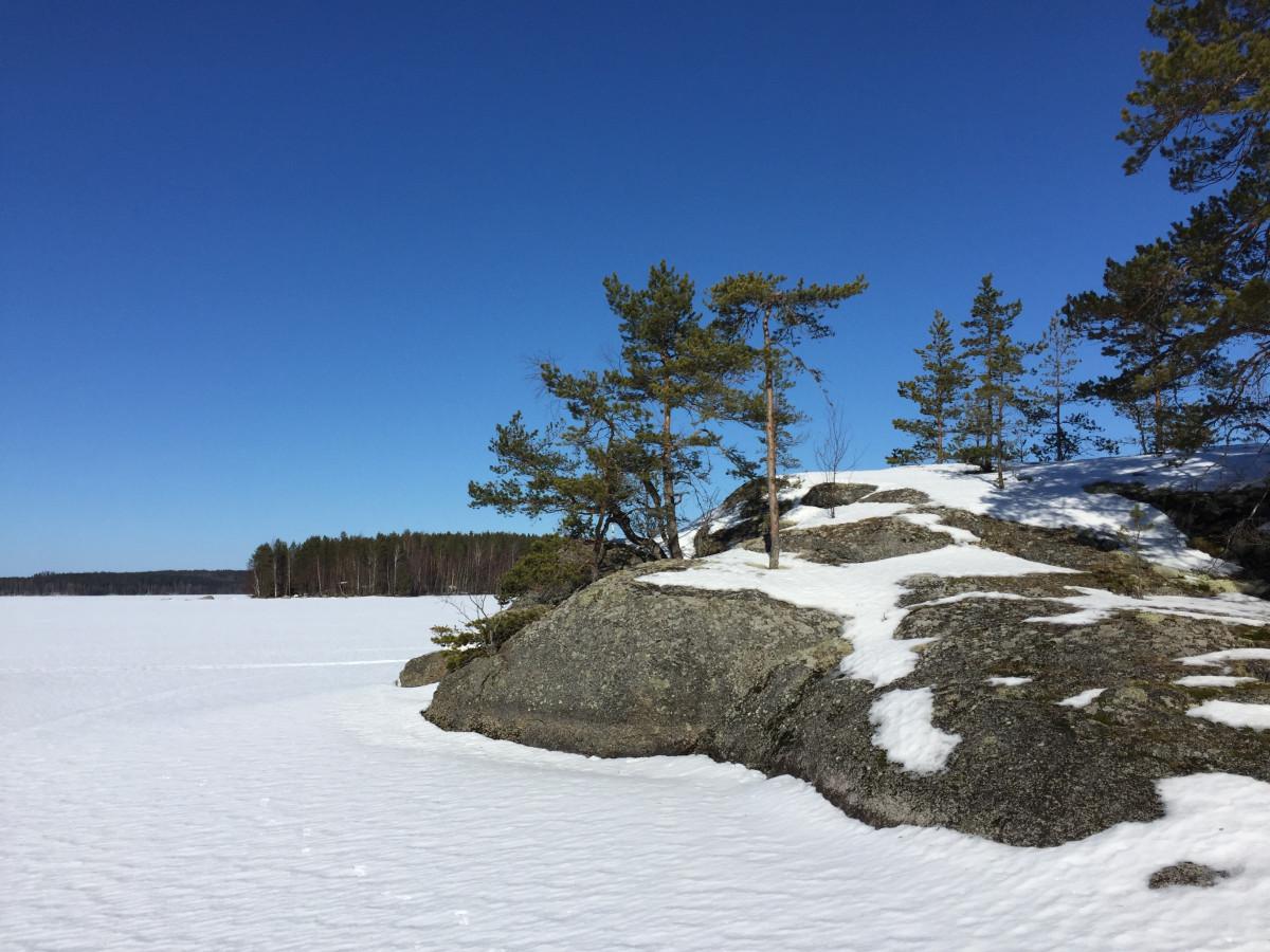 Gambar Pohon Alam Hutan Gunung Musim Dingin Putih Sinar