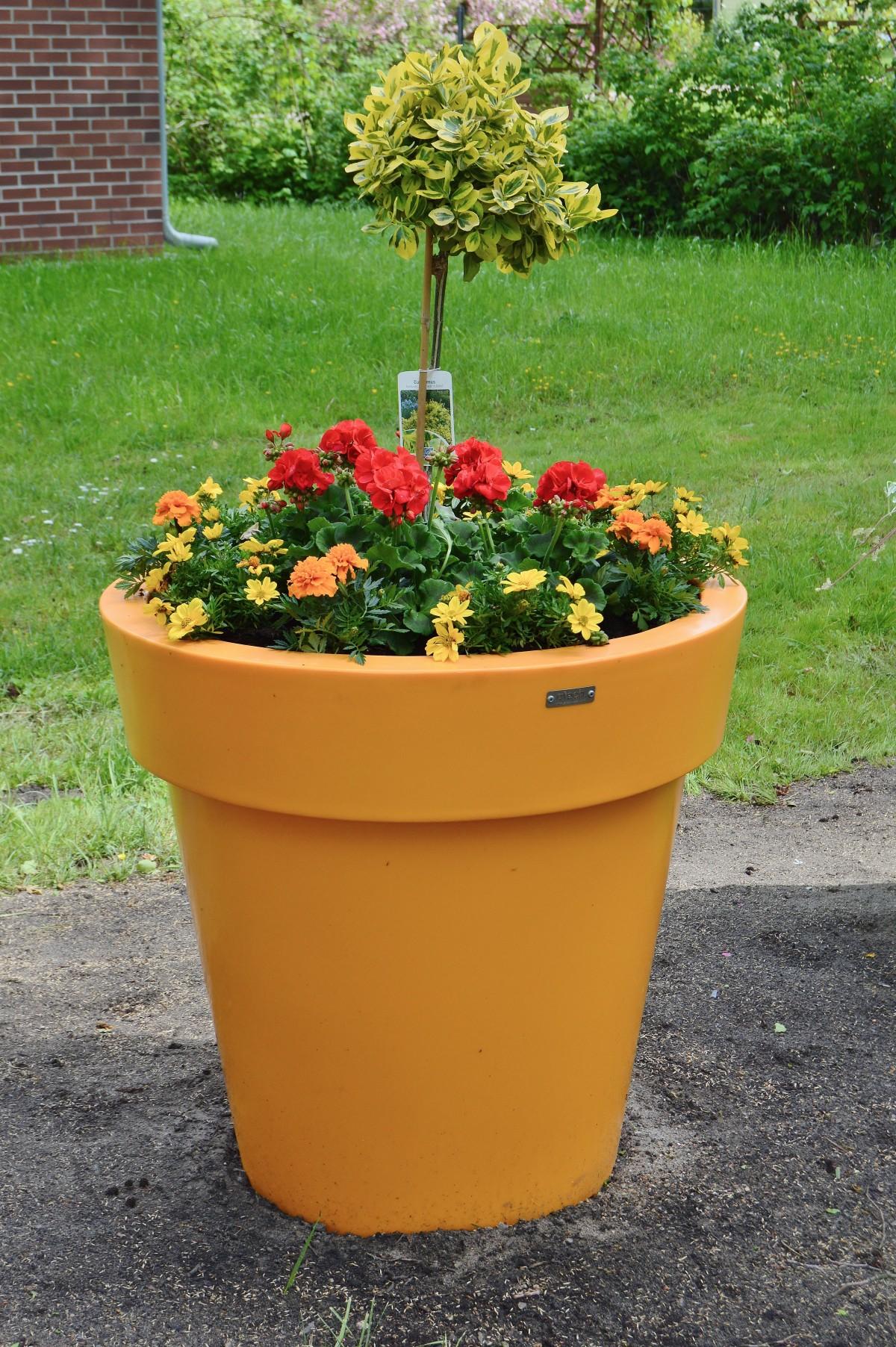 Images gratuites pelouse parc arri re cour jardin for Arbuste deco jardin
