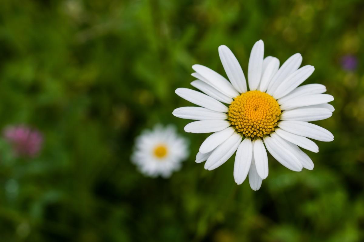 Free Images Nature White Flower Petal Backyard Botany
