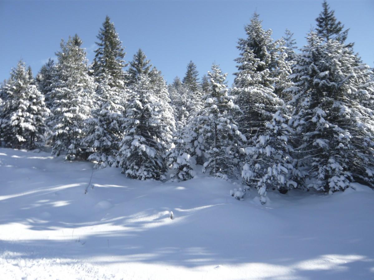 Images gratuites arbre montagne neige hiver gel - Meteo petite foret ...