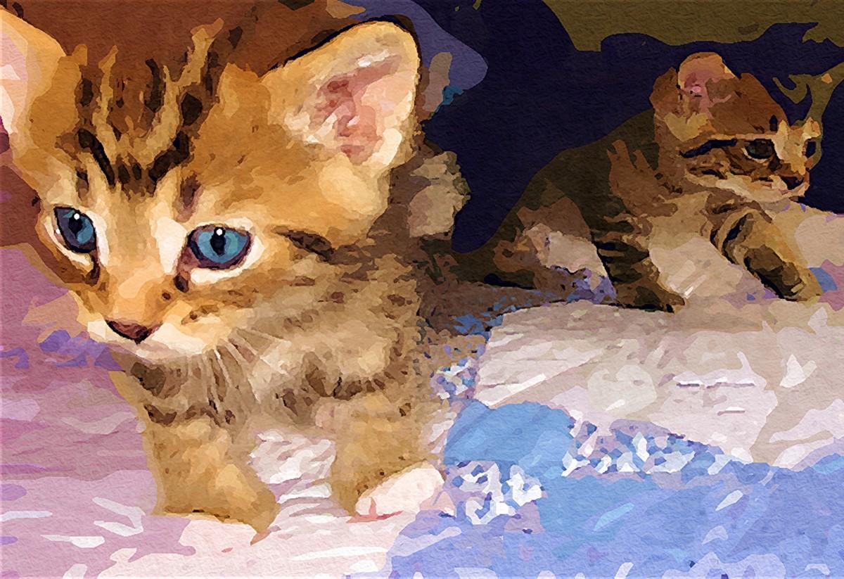 Fotoğraf Doğa Hayvan Sevimli Evcil Hayvan Kürk Kedi Yavrusu