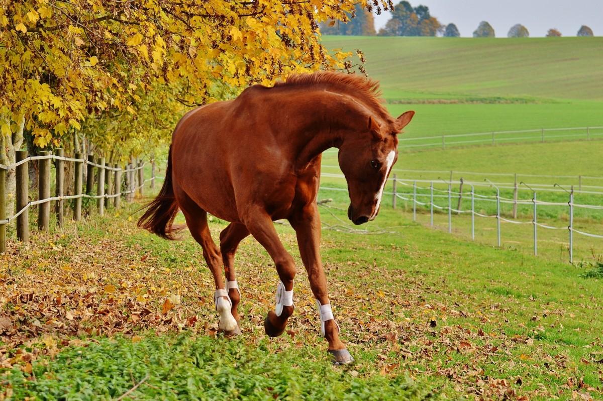 Красивый ухоженный конь снится абсолютно здоровым людям.