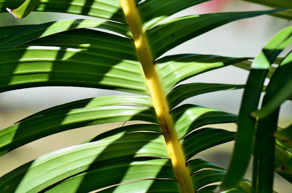 images gratuites arbre la nature herbe branche fruit lumi re du soleil feuille fleur. Black Bedroom Furniture Sets. Home Design Ideas