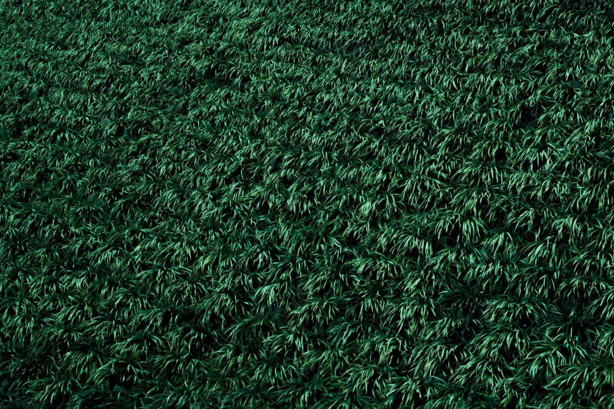 kostenlose foto gras pflanze rasen textur blatt muster gr n boden strauch netz. Black Bedroom Furniture Sets. Home Design Ideas