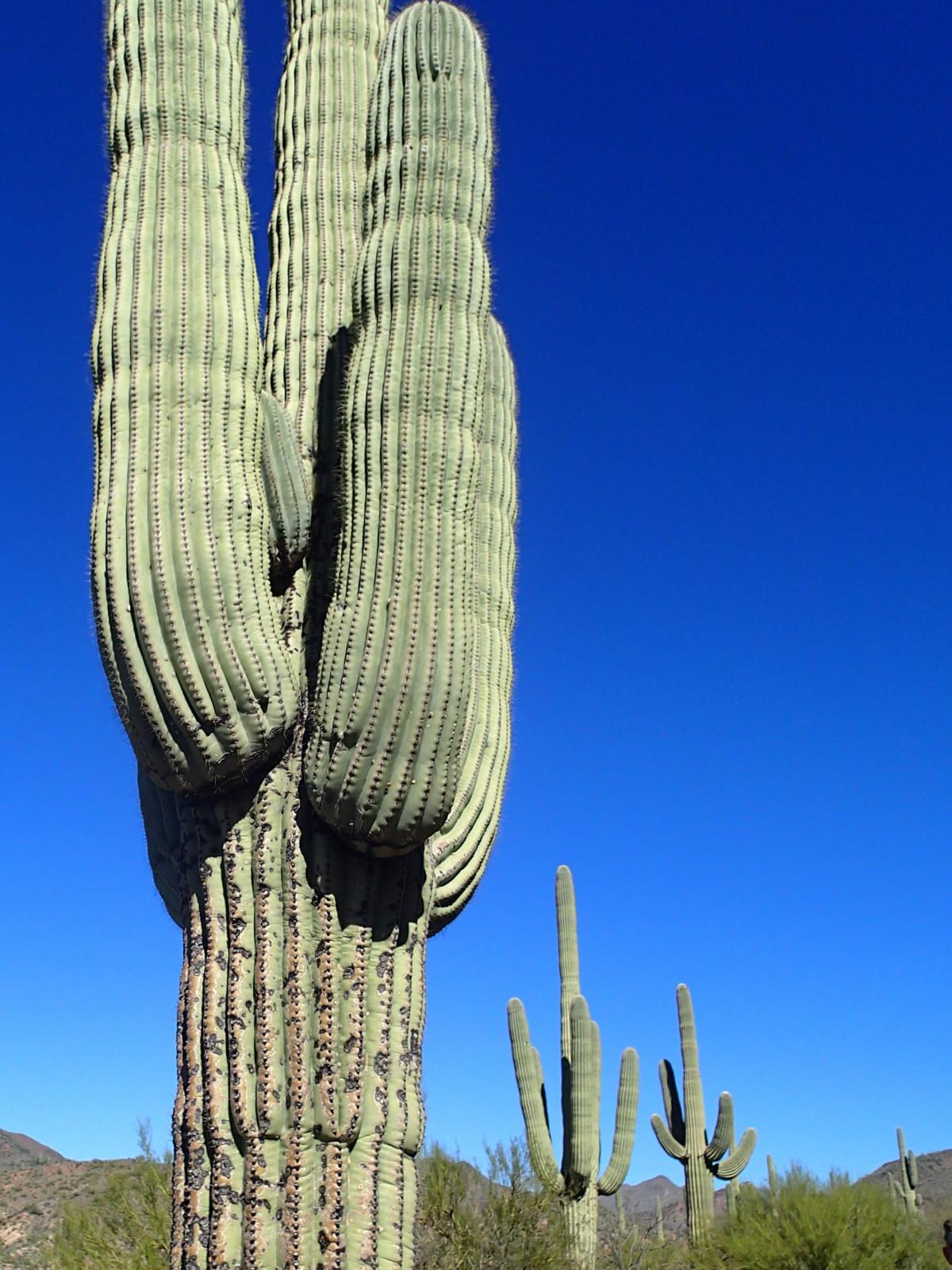 Лесные кактусы картинки