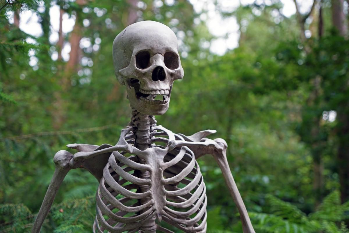 картинки какие бывают скелеты рынок