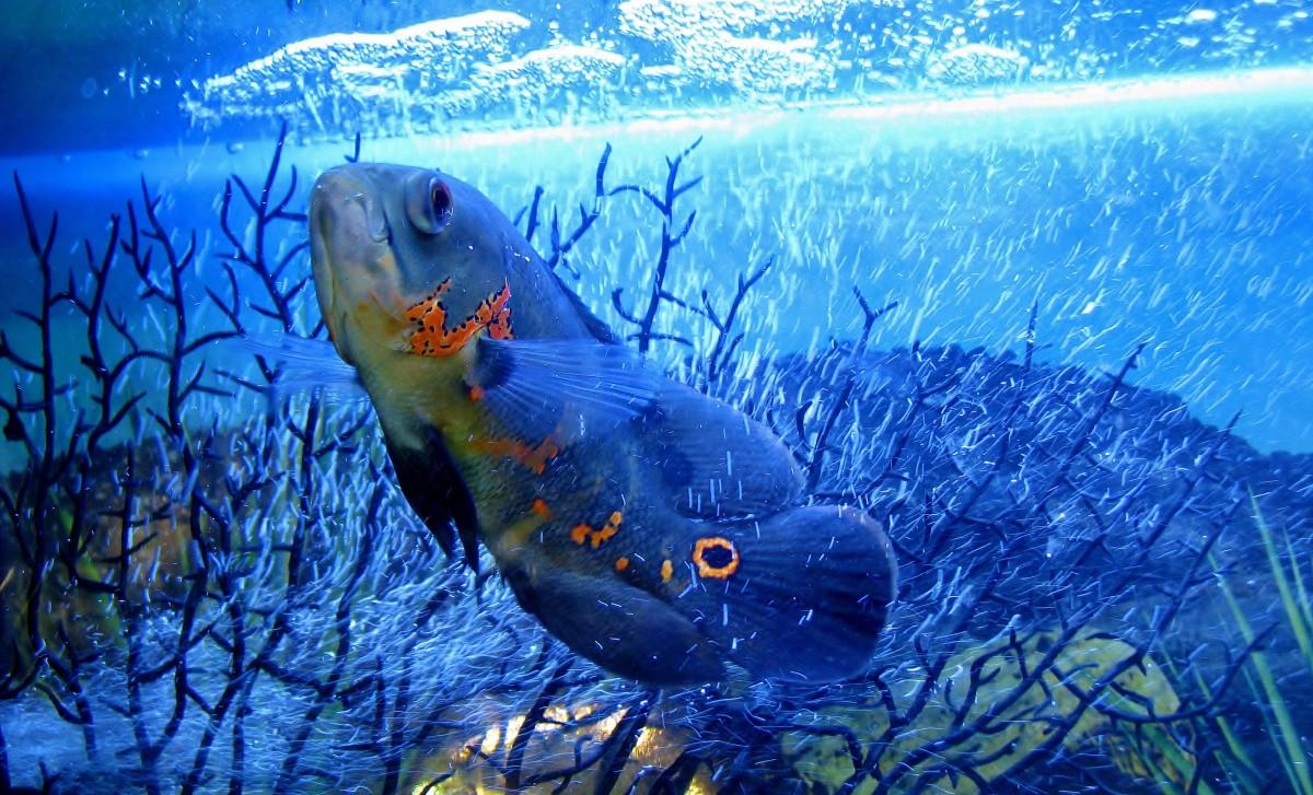 каждой картинка рыбы плавают в воде кидается глаза странная