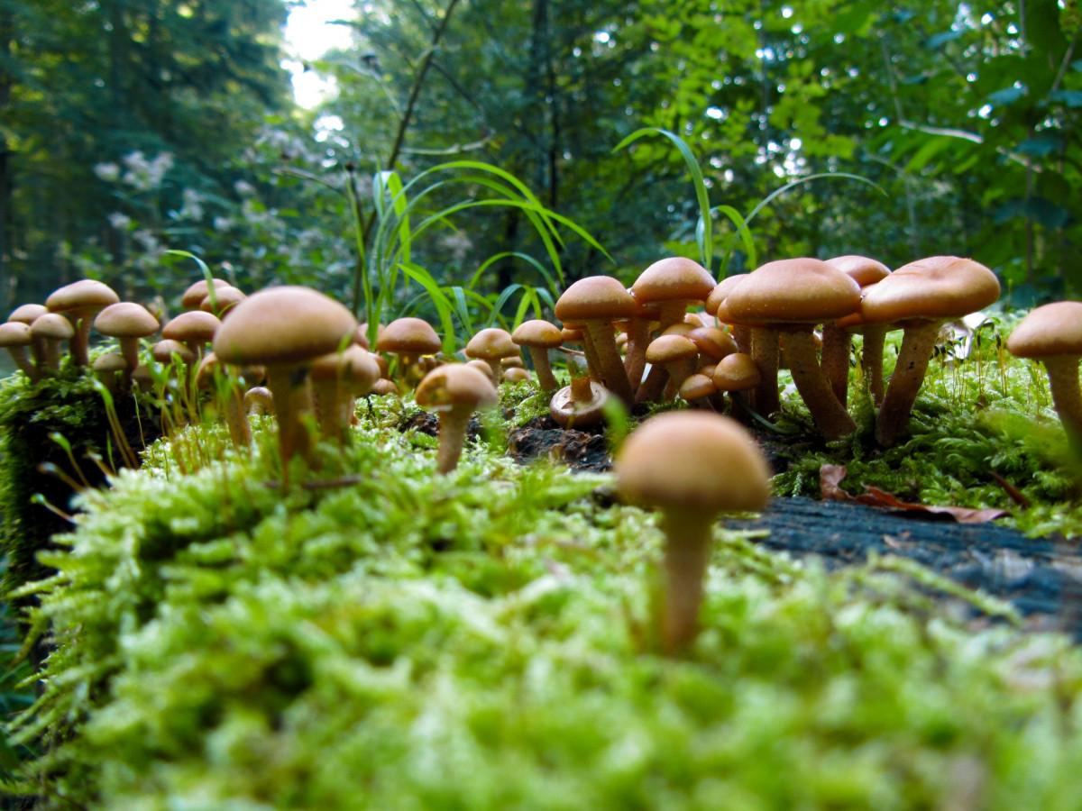 Images gratuites la nature plante vert jungle l for Plante jungle