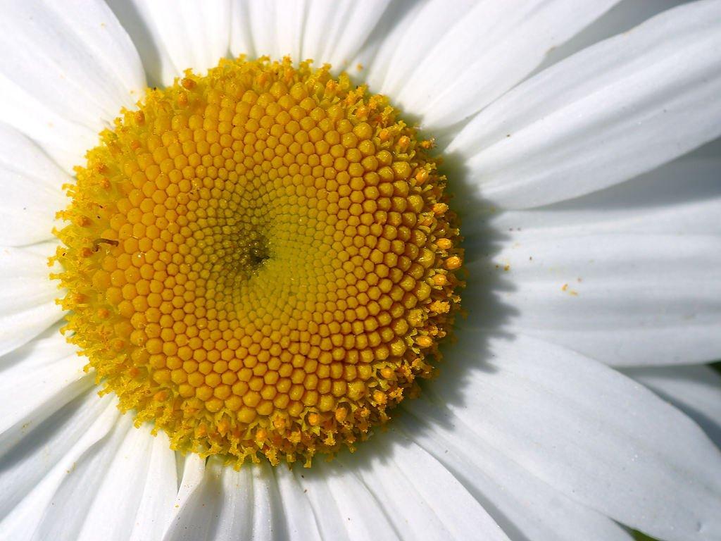 Картинки сердцевины цветка