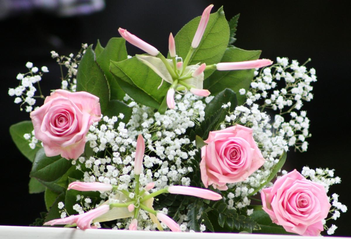 kostenlose foto  blühen weiß blume blütenblatt strauß