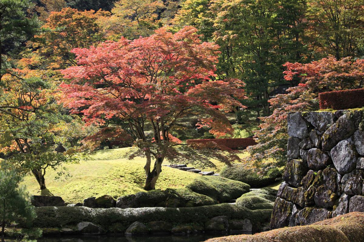 Fotos gratis paisaje rbol naturaleza bosque rock for Arboles jardin japones