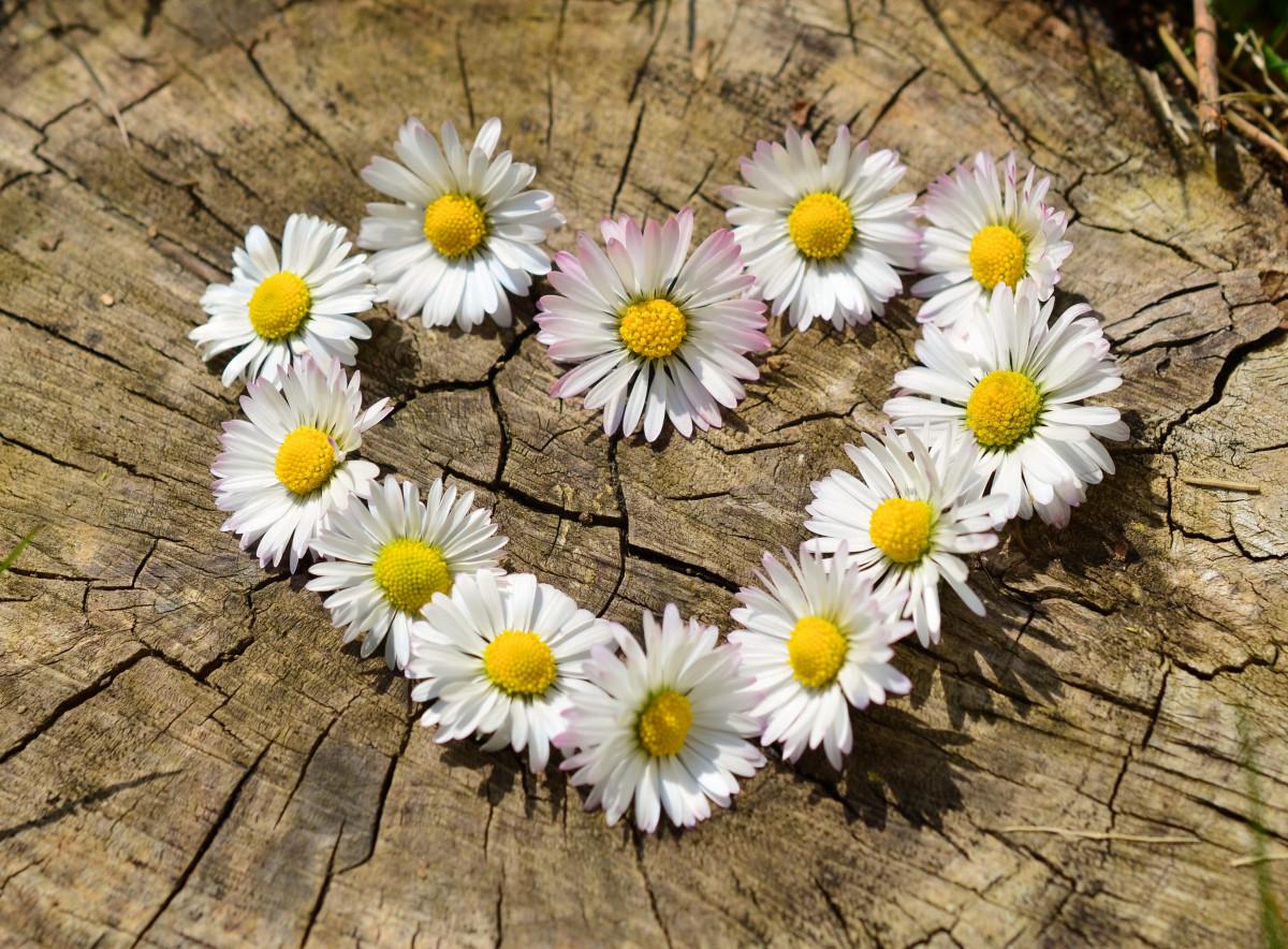 Картинки любовь цветы, открытки