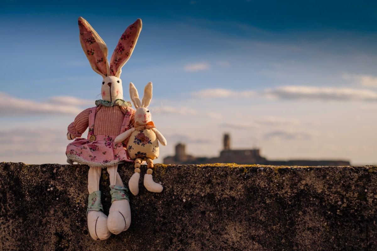 небо цветок Домашнее животное цвет кролик Животные образ Тедди Детские игрушки