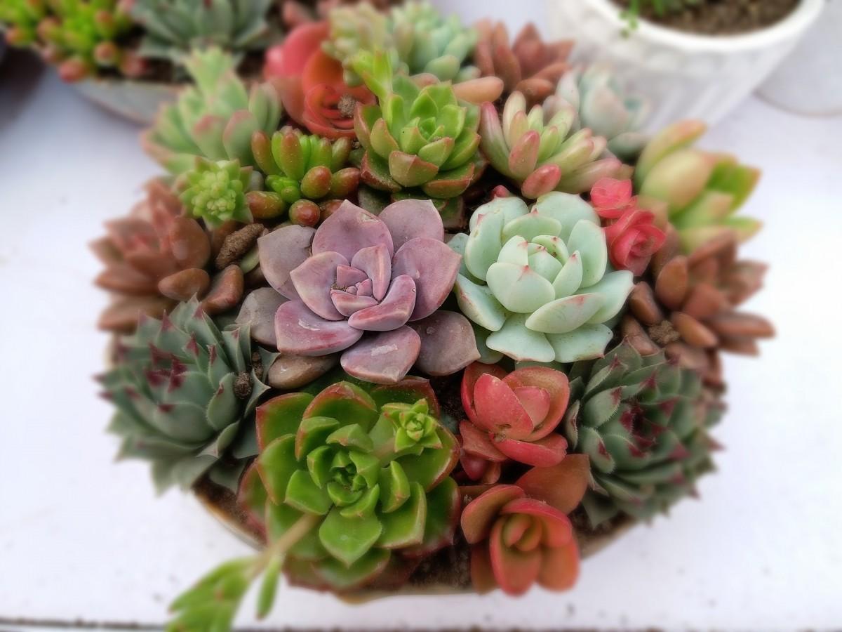 Fotos gratis planta flor p talo florister a el - Cortar hierba alta ...