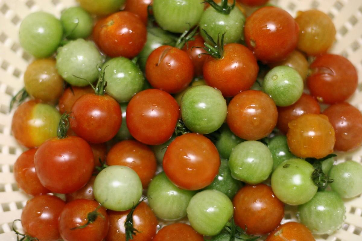 Как сделать красными зеленые помидоры 573