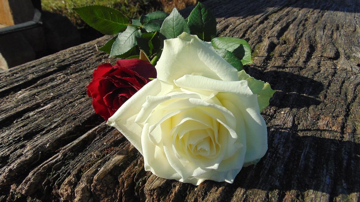 картинки роз по почте так