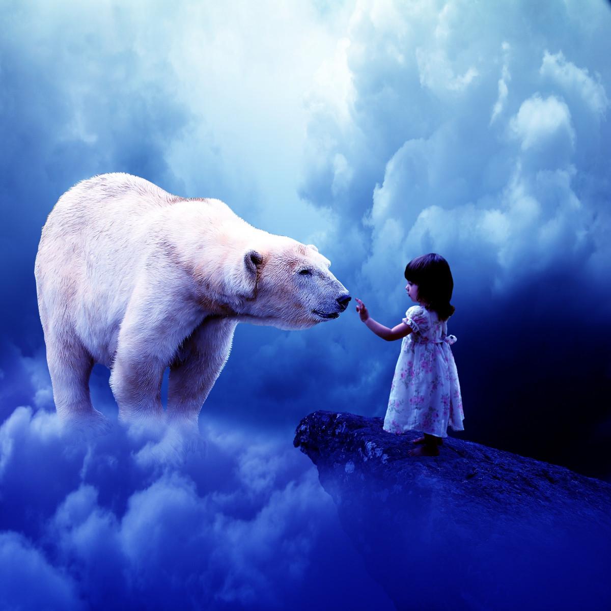 gratis billeder   hav  pige  bj u00f8rn  pattedyr  bl u00e5  arctic