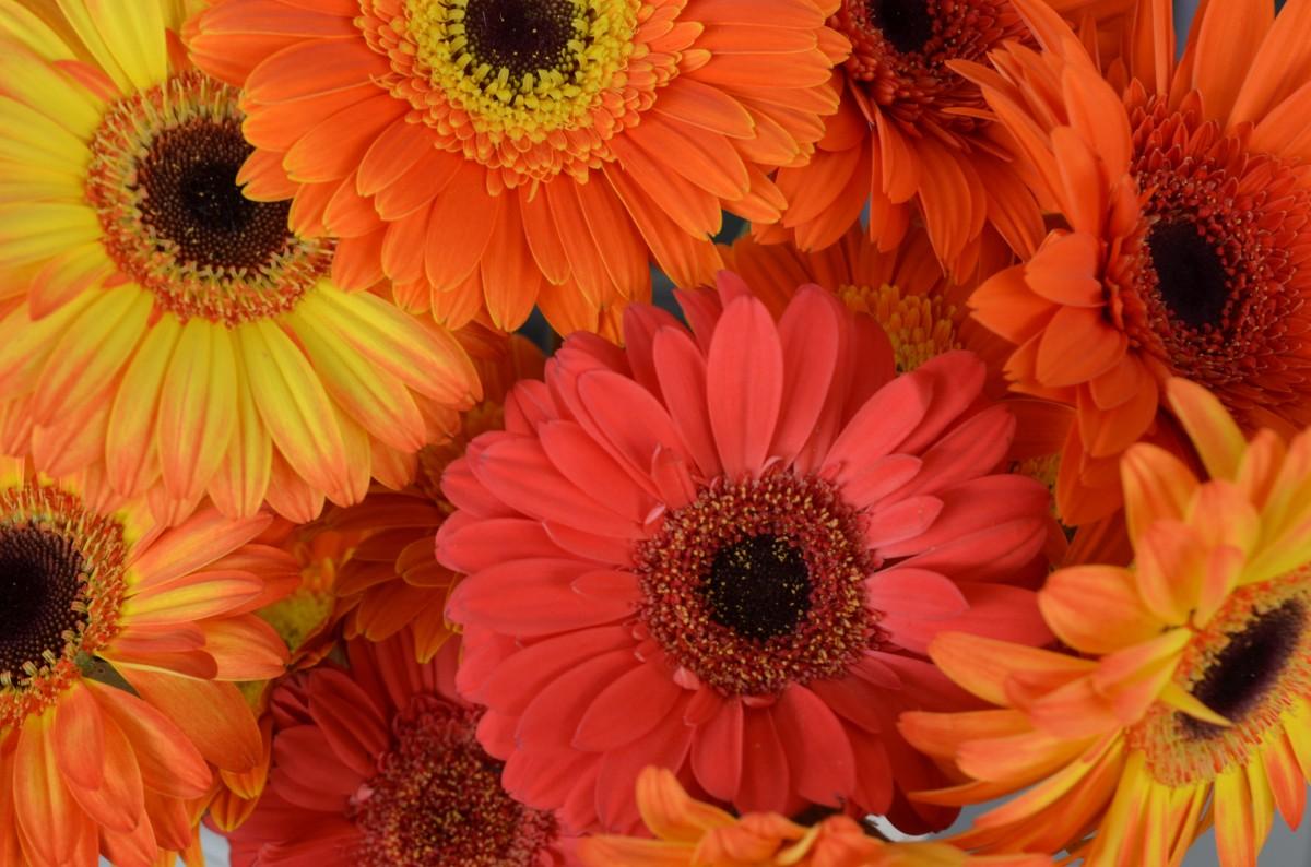 Картинки оранжевых, маме день