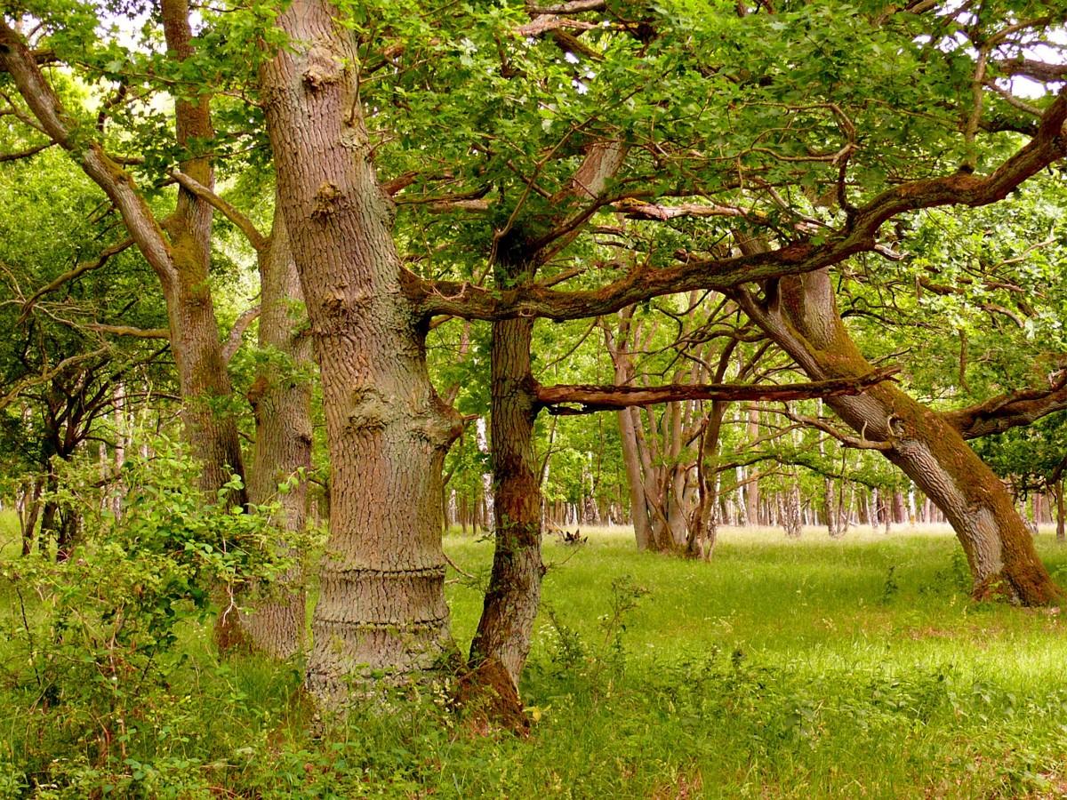 Images gratuites arbre for t branche feuille fleur - Arbres a feuilles caduques ...