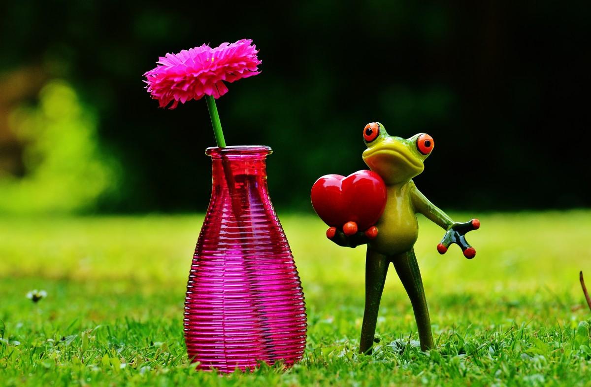 images gratuites herbe pelouse prairie fleur verre amour c ur vase vert couleur l. Black Bedroom Furniture Sets. Home Design Ideas