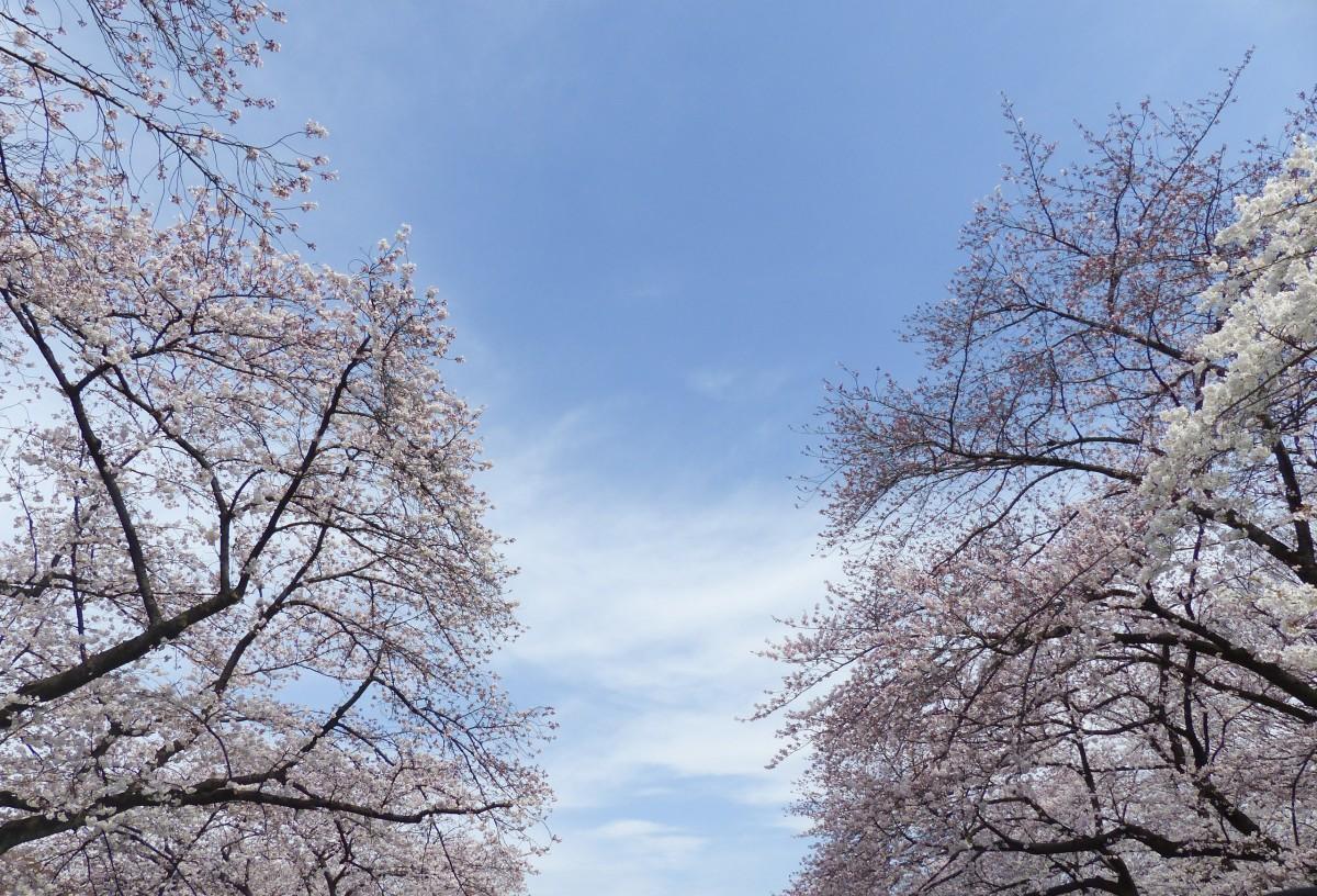 Images gratuites arbre branche hiver plante ciel for Floraison hiver