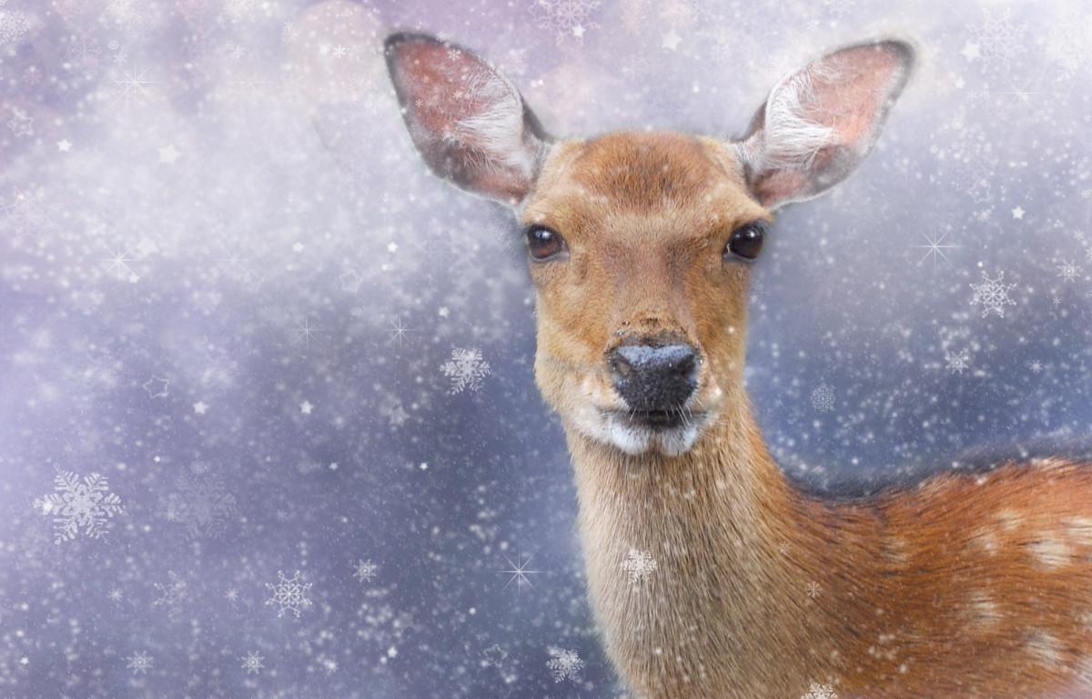 Images gratuites du froid hiver animal faune zoo - Photos de neige gratuites ...